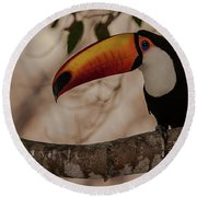 Close-up Of Tocu Toucan Ramphastos Toco Round Beach Towel by Panoramic Images