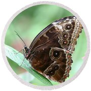 Closed Blue Morpho Round Beach Towel by Denyse Duhaime