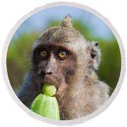 Closeup Monkey Eating Cucumber Round Beach Towel