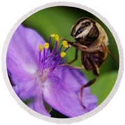 Closeup Of A Bee On A Purple Flower Round Beach Towel