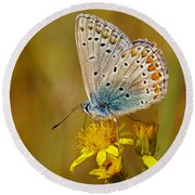 Closeup Of A Common Blue Butterfly Round Beach Towel
