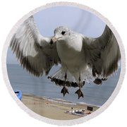 Closeup Of Hovering Seagull Round Beach Towel