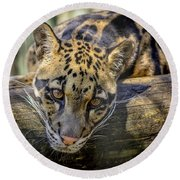 Round Beach Towel featuring the photograph Clouded Leopard by Steven Sparks
