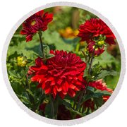 Cluster Of Dahlias Round Beach Towel