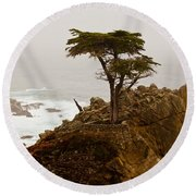 Coastline Cypress Round Beach Towel by Melinda Ledsome