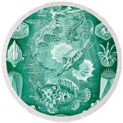 Collection Of Teleostei Round Beach Towel by Ernst Haeckel