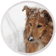 Collie In The Snow Round Beach Towel by Jeannette Hunt