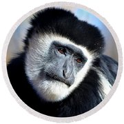 Round Beach Towel featuring the photograph Colobus Contemplation by Deena Stoddard