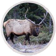 Colorado Bull Elk Round Beach Towel