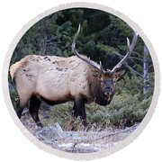Colorado Bull Elk Round Beach Towel