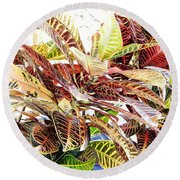 Colorful - Croton - Plant Round Beach Towel