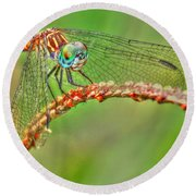 Colorful Dragonfly Round Beach Towel