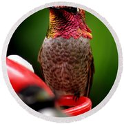 Round Beach Towel featuring the photograph Colorful Male Anna Hummingbird On Perch by Jay Milo