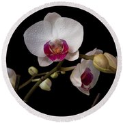 Colorful Moth Orchid Round Beach Towel by Ron White