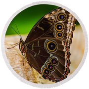 Round Beach Towel featuring the photograph Colour Display by Garvin Hunter