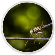 Colourful Australian Dragonfly At Insect Crossing Round Beach Towel