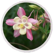 Round Beach Towel featuring the photograph Columbine by Kathryn Meyer