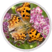 Comma Butterfly Round Beach Towel by Richard Thomas