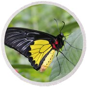 Round Beach Towel featuring the photograph Common Birdwing Butterfly by Judy Whitton