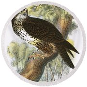 Common Buzzard Round Beach Towel by English School
