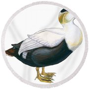 Common Eider Round Beach Towel