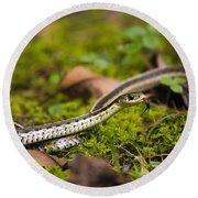 Common Garter Snake Round Beach Towel