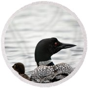 Common Loon And Baby Round Beach Towel