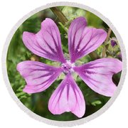 Round Beach Towel featuring the photograph Common Mallow Flower by George Atsametakis