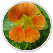 Common Nasturtium Round Beach Towel