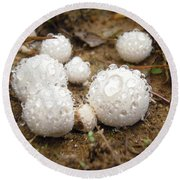 Common Puffball Dewdrop Harvest Round Beach Towel