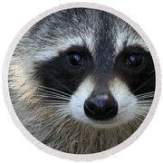 Common Raccoon Round Beach Towel