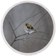 Round Beach Towel featuring the photograph Common Redpoll by David Porteus