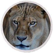 Concerned Lioness Round Beach Towel