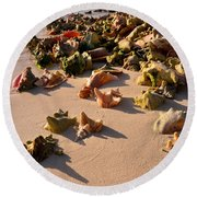 Conch Collection Round Beach Towel by Jola Martysz