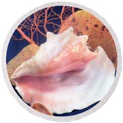 Conch Still Life Round Beach Towel