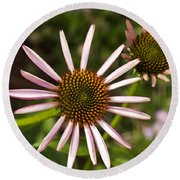 Cone Flower - 1 Round Beach Towel by Charles Hite