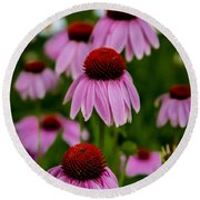 Coneflowers In Front Of Daisies Round Beach Towel