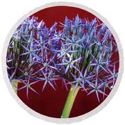 Round Beach Towel featuring the photograph Flowering Onions by Roselynne Broussard