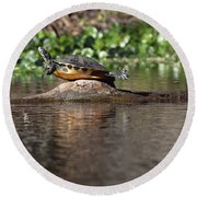 Round Beach Towel featuring the photograph Cooter On Alligator Log by Paul Rebmann