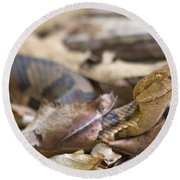 Copperhead In The Wild Round Beach Towel