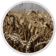 Round Beach Towel featuring the photograph Corn Field by Vicki Spindler