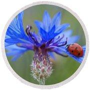 Round Beach Towel featuring the photograph Cornflower Ladybug Siebenpunkt Blue Red Flower by Paul Fearn