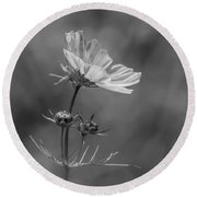 Round Beach Towel featuring the photograph Cosmo Flower Reaching For The Sun by Debbie Green