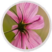Cosmos In Pink Round Beach Towel