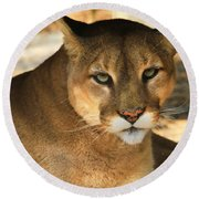 Cougar II Round Beach Towel by Roger Becker