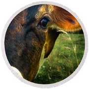 Cow Eating Grass Round Beach Towel by Bob Orsillo