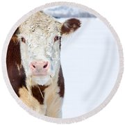 Cow - Fine Art Photography Print Round Beach Towel