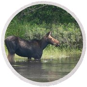 Cow Moose Breakfast Round Beach Towel