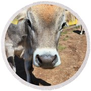 Cow On Alpine Pasture Round Beach Towel