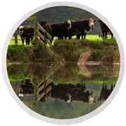 Cow Reflections Round Beach Towel